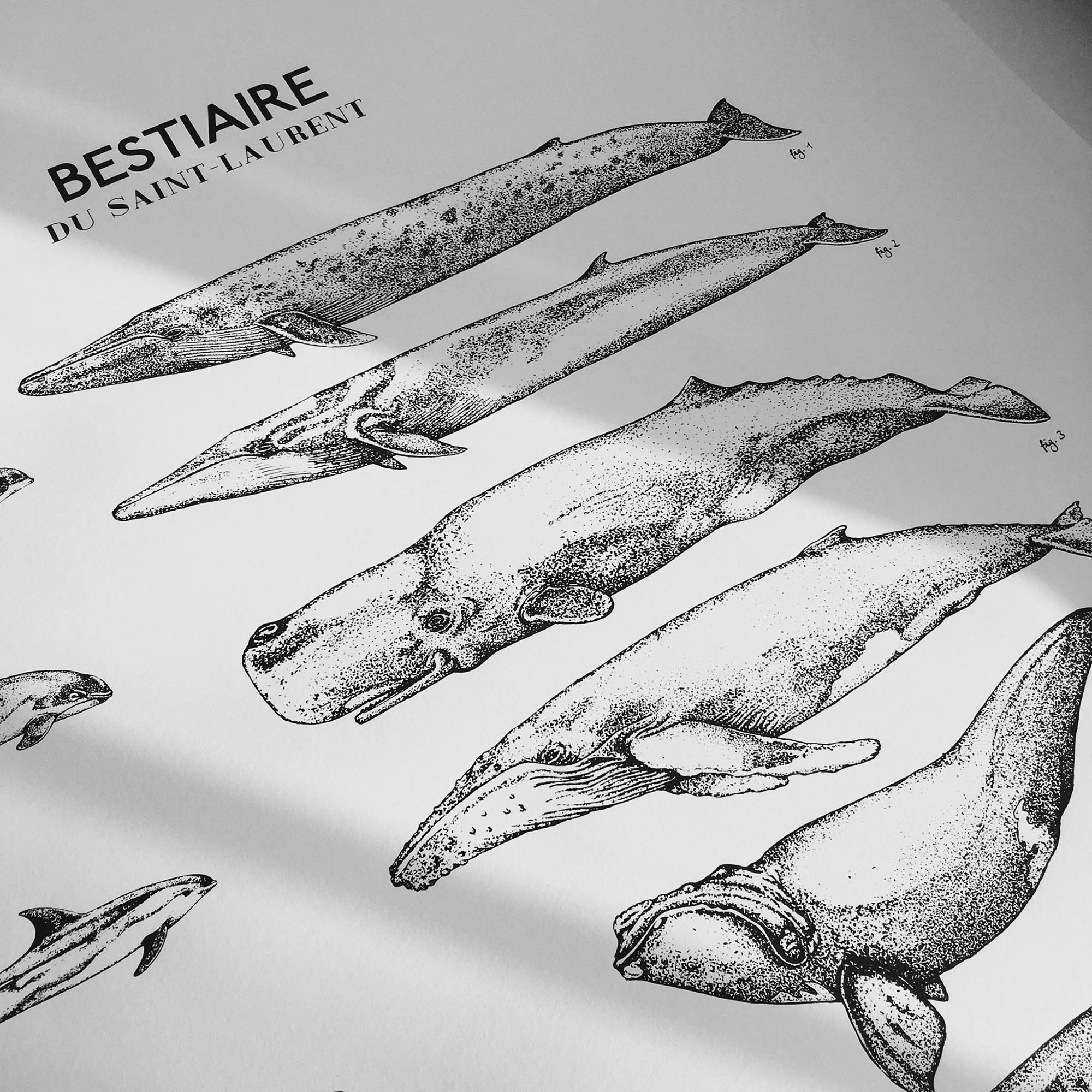 ILLUSTRATION-BALEINE-SERIGRAPHIE-FAIT-MAIN-CANADA-CREATION-DESSIN
