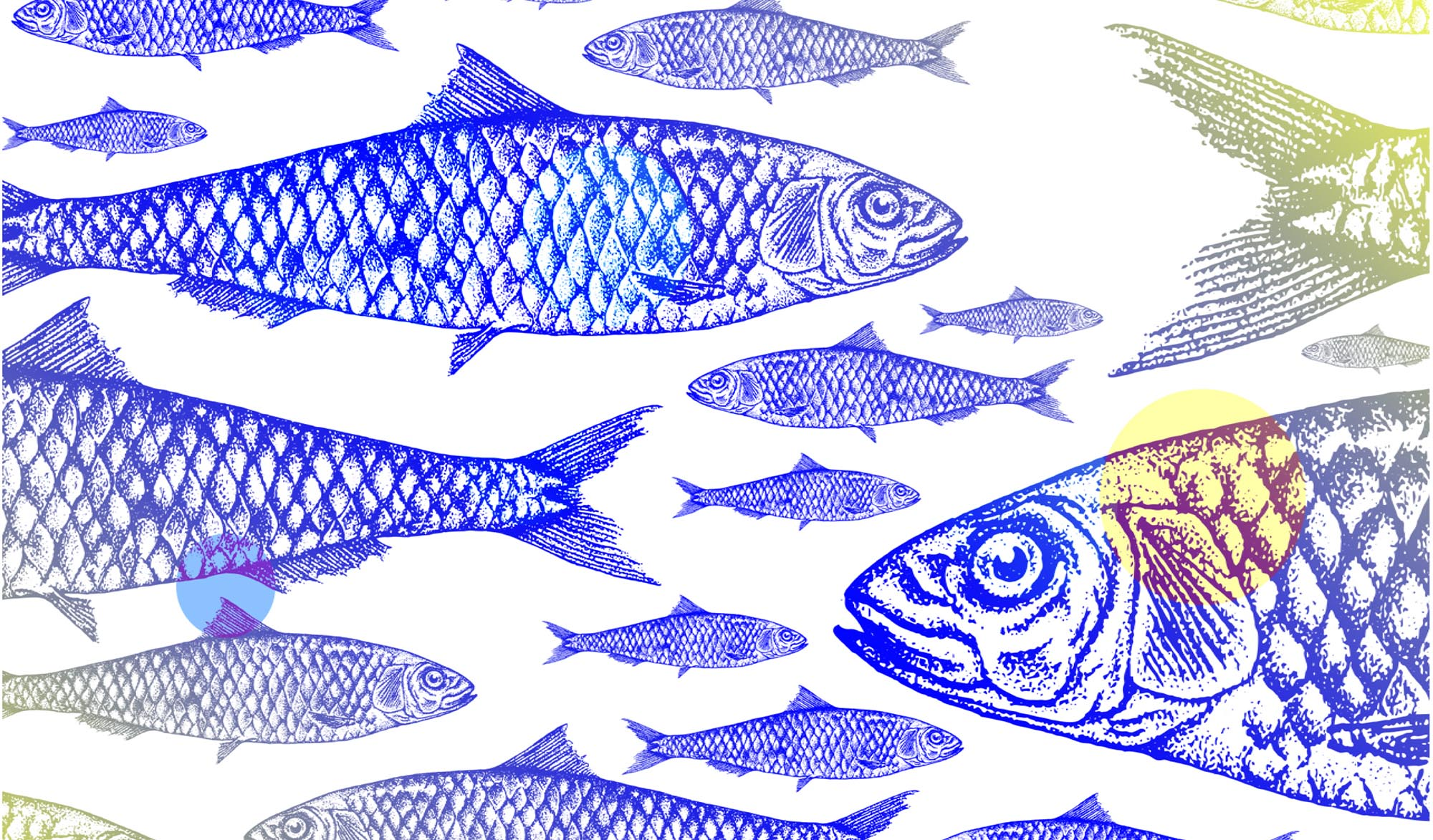 left ILLUSTRATION-POISSON-FISH-ANIMATION-HABILLAGE-GRAPHIQUE